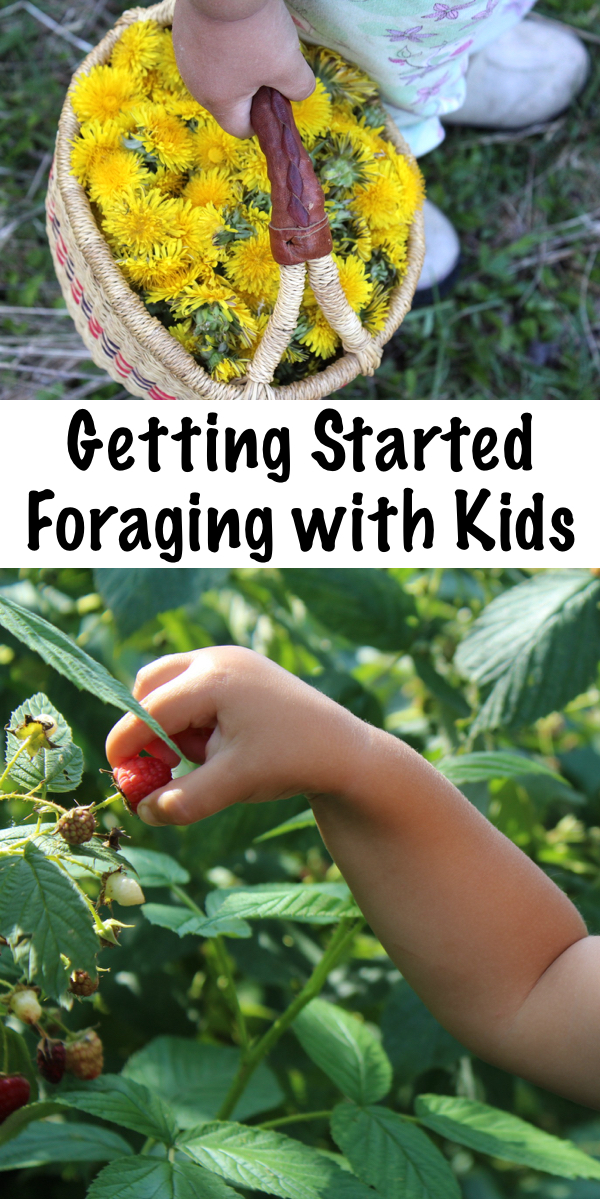 Getting Started Foraging with Kids ~ Tips and advice for foraging with children. #foraging #kids #herbalism #forbeginners #wildcrafting
