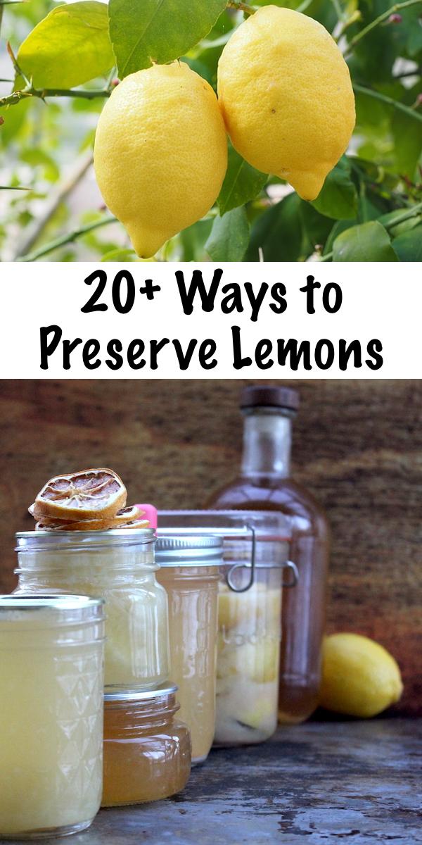 20+ Ways to Preserve Lemons ~ Natural Ways to Preserve Citrus Fruits ~ Canning Lemons, Drying Lemons, Fermenting Lemons and More #lemons #recipe #foodpreservation #citrus #homesteading #selfsufficiency #prepper #shtf