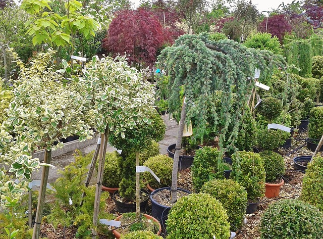 backyard plant nursery