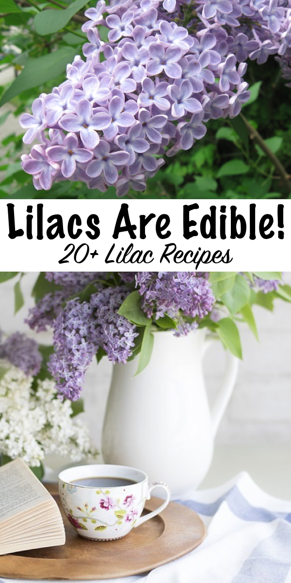20+ Ways to use lilacs ~ Did you know lilacs are edible flowers? Here's 20+ recipes using lilacs for your spring kitchen.