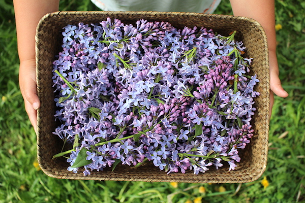 Edible lilac flowers in a basket