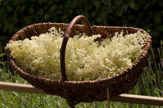 Basket of elderflowers