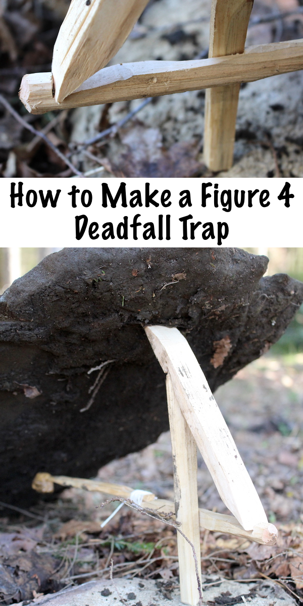 How to Make a Figure 4 Deadfall Trap ~ This simple primitive trap can be made in under an hour with a few sticks and a sharp knife. Trapping is an essential skill for backwoods bushcraft survival, and this is one of the simplest types of trap. #bushcraft #survival #survivalskills