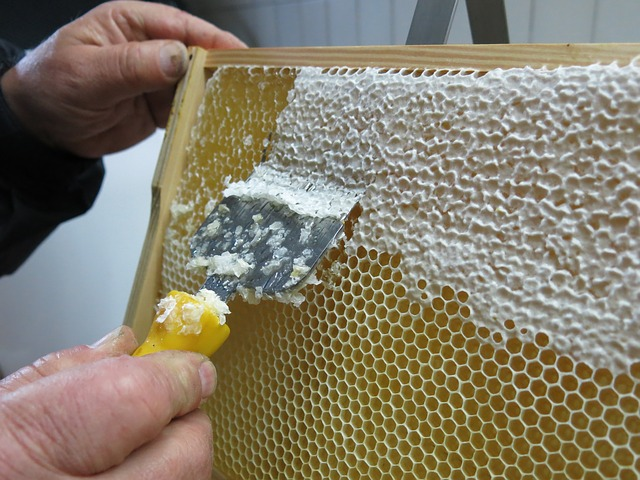 Uncapping honey comb to allow for honey extraction