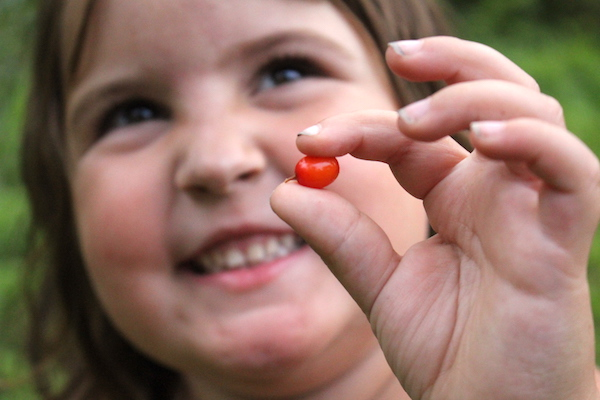Child smiling while holding edible berry, specifically orange fruits of sea buckthorn