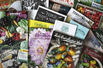 Free Seed Catalogs