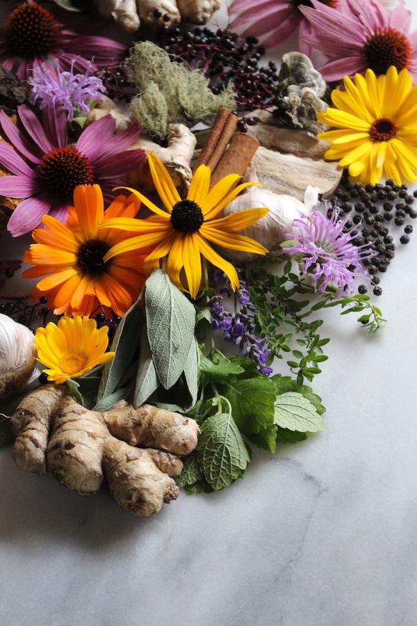 Immune Boosting Herbs