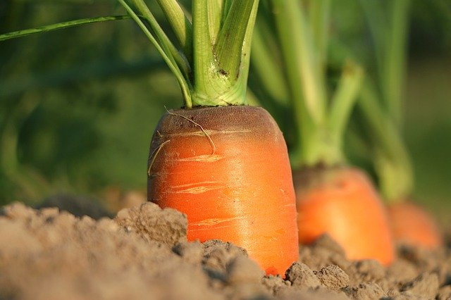 Used coffee grounds are great for spacing carrot seeds during planting (and they're a natural fertilizer too!)