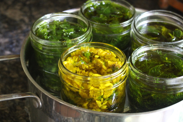 Infusing oils with fresh herbs takes a bit of care, and usually involves a double boiler so the herbs infuse before they spoil. It's a quicker process, infusing over 1-2 days instead of 3-6 weeks.