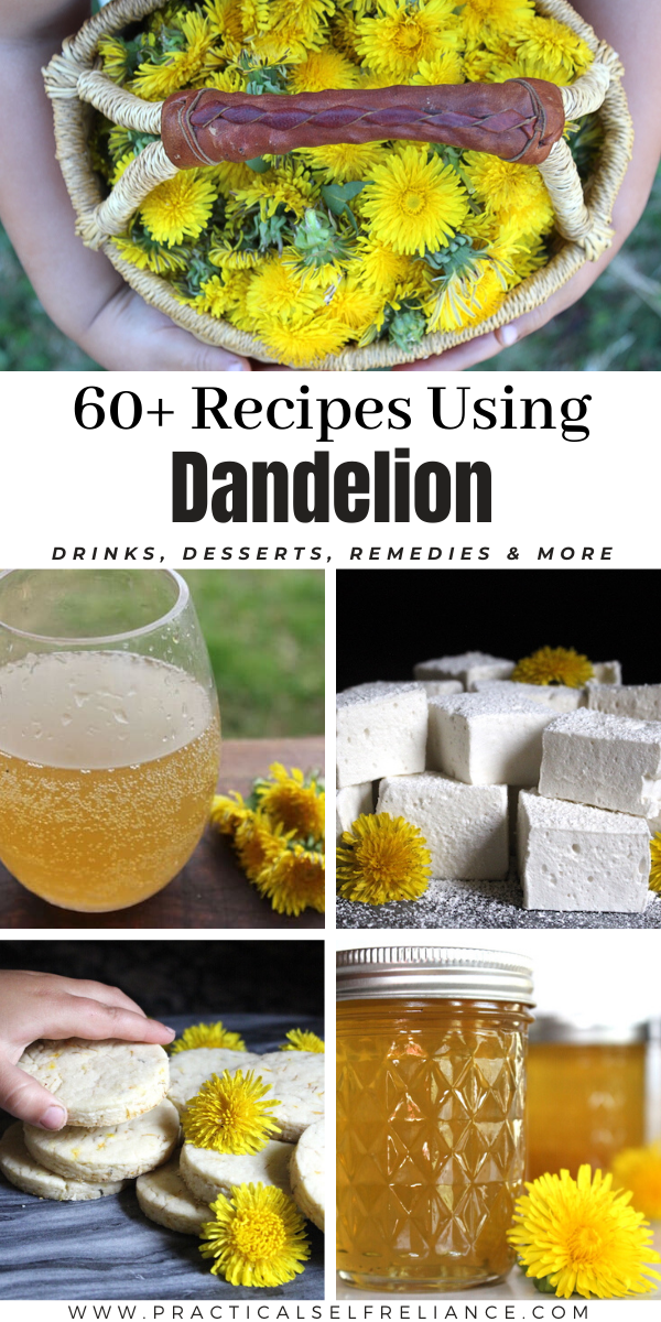 60+ Dandelion Recipes ~ Ways to use dandelions in the kitchen from drinks to snacks and desserts. Also includes medicinal uses of dandelions for home remedies like tinctures and salves.