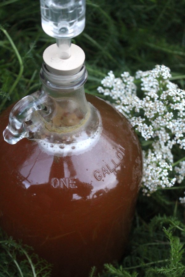 Our own homemade yarrow beer