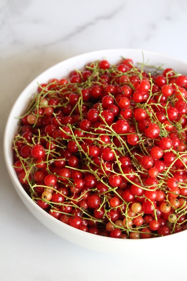 Redcurrants with stems for redcurrant jelly