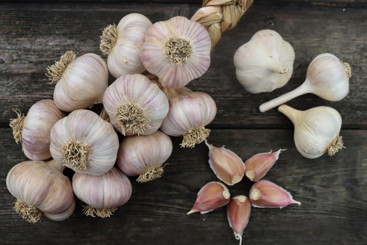 Garlic Growing