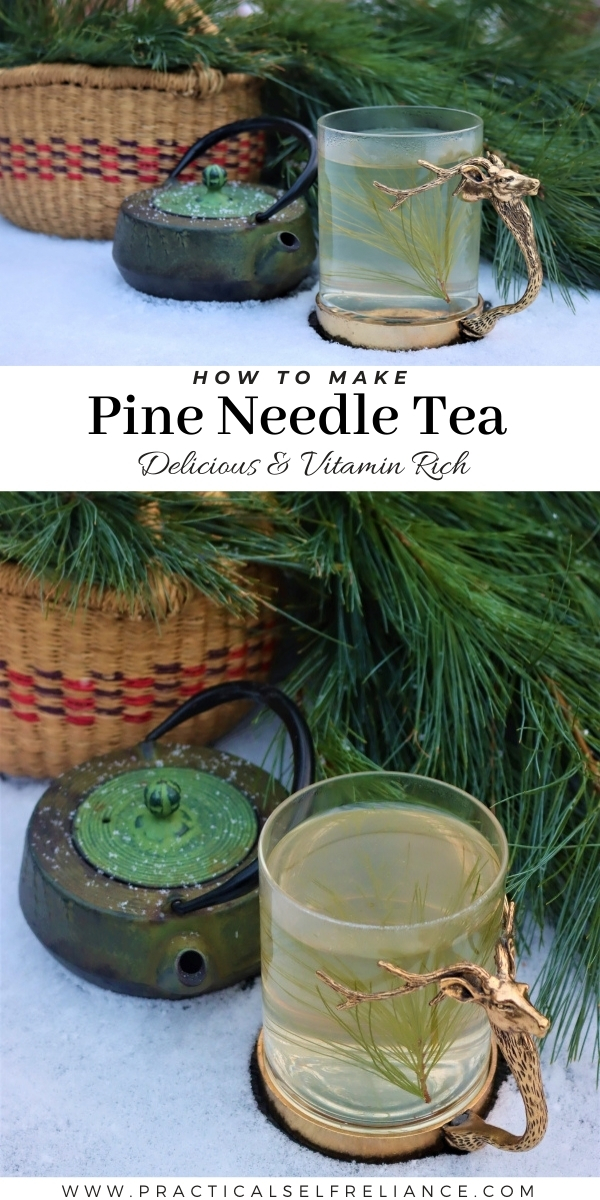 Pine Needle Tea ~ Delicious wild foraged tea.