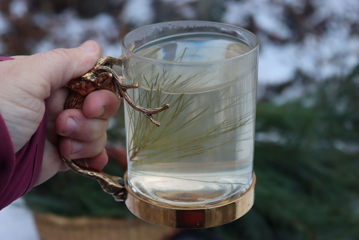 Mug of Pine Needle Tea