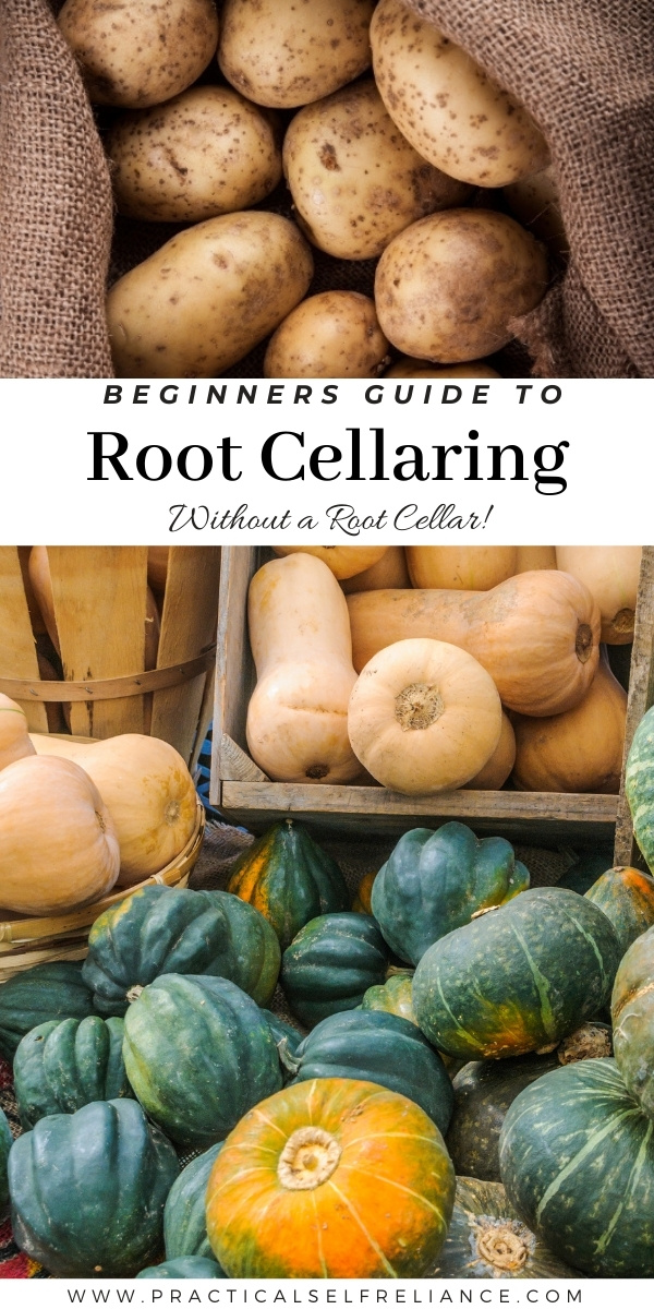 Beginners Guide to Root Cellaring