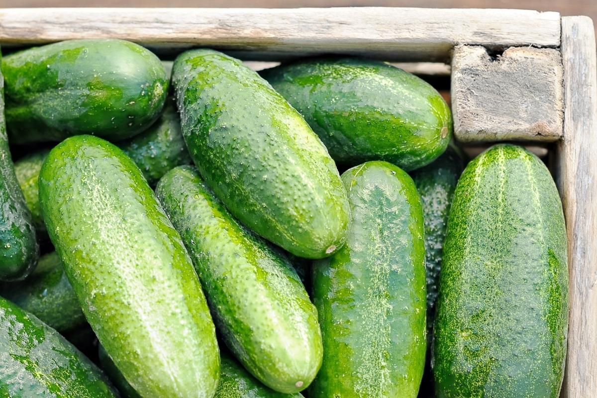 Cucumber Storage