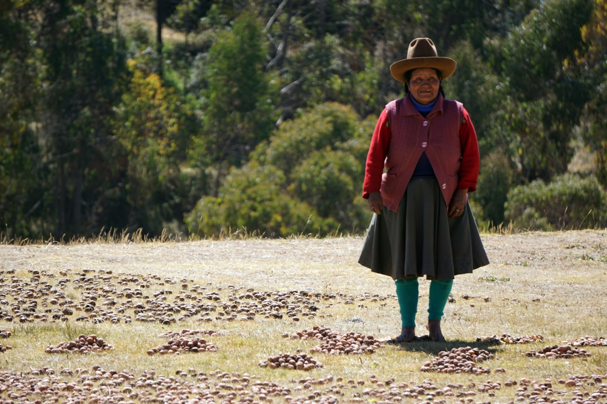 Freeze Drying Potatoes in the Andes Potatoes
