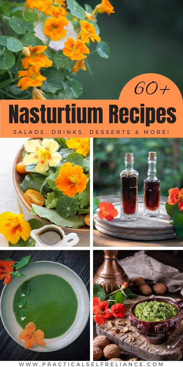 60+ Nasturtium Recipes to make with these tasty edible flowers
