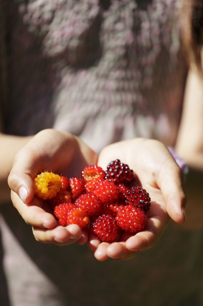 Salmonberries come in a variety of colors