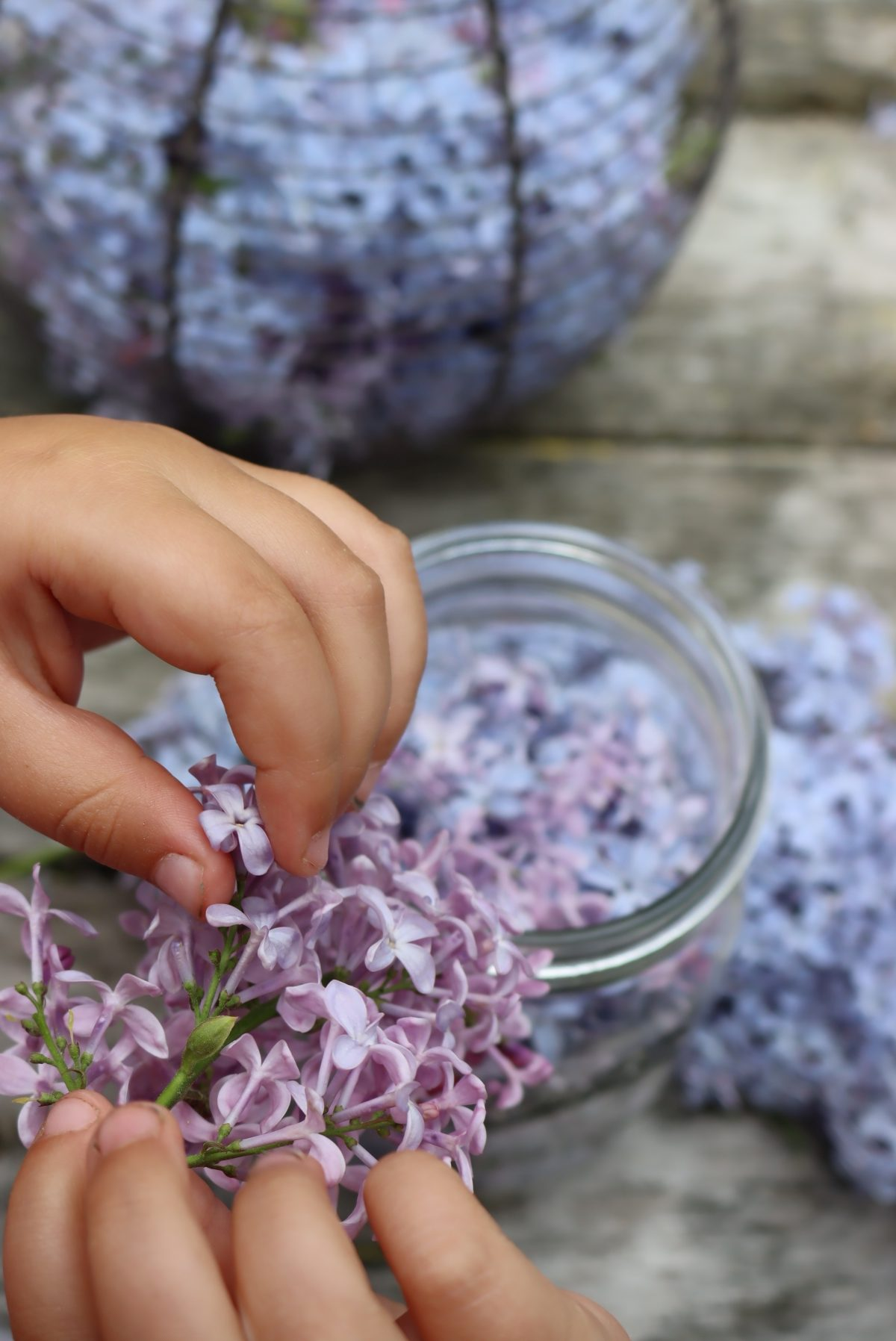 Separating Lilac Flowers