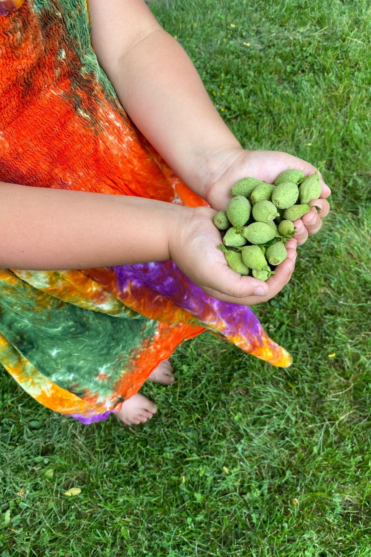 Green Walnut Recipes