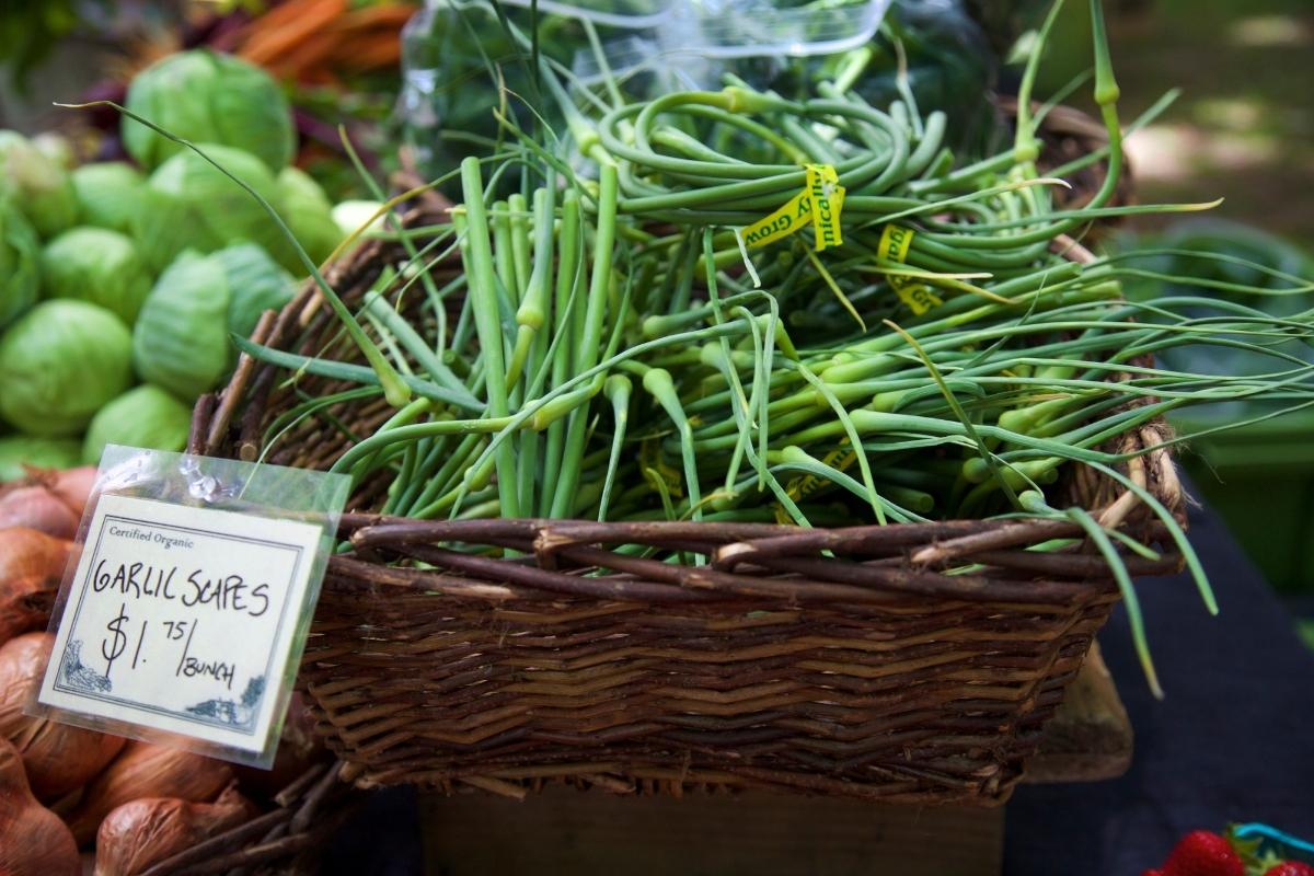Garlic Scapes at Farmers Market
