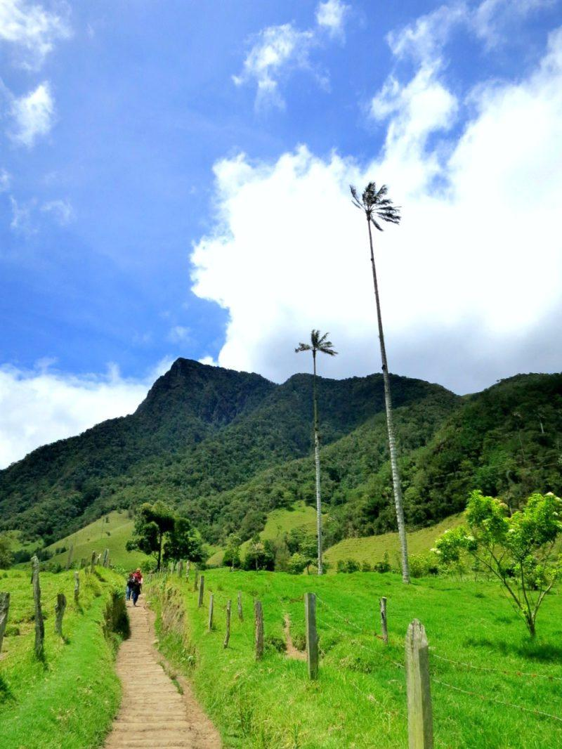 Hiking Valle De Cocora In Salento Colombia What You Need To Know