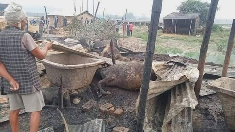 आगलागीमा परी २० गाई जलेर मरे
