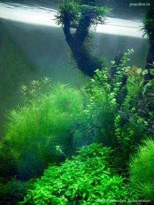 Коряги в аквариуме, оформление аквариума
