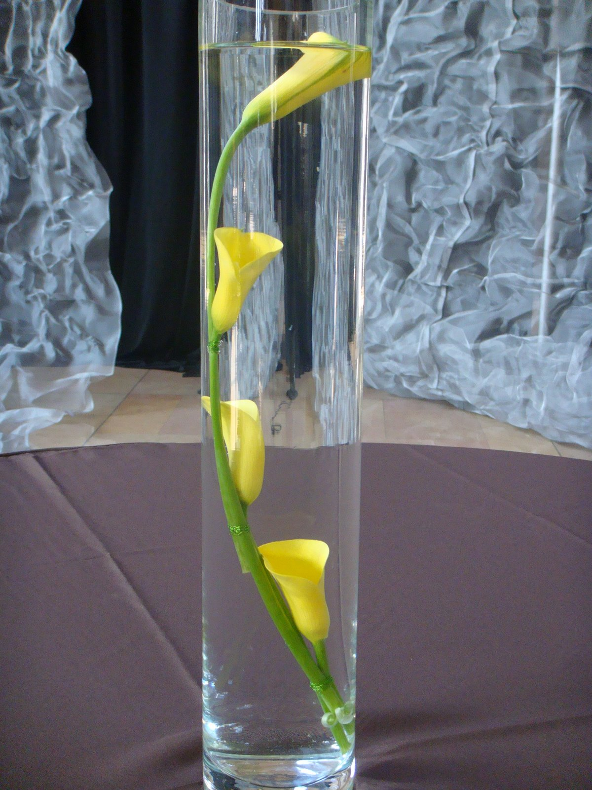 Talking about Flowers The Calla Lily  Praesto Acacia