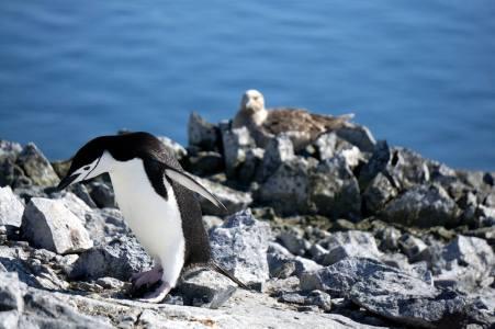 photos_and_videos/AntarcticaPenguins_10155338149716869/18121536_10155338173556869_422788044041233654_o_10155338173556869.jpg