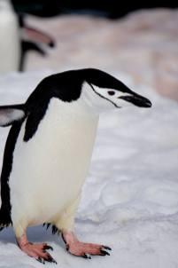 photos_and_videos/AntarcticaPenguins_10155338149716869/18121641_10155338150116869_8778015456060320237_o_10155338150116869.jpg