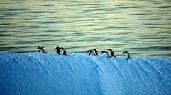 photos_and_videos/AntarcticaPenguins_10155338149716869/18121767_10155338163041869_8334411897176225723_o_10155338163041869.jpg