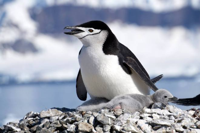 photos_and_videos/AntarcticaPenguins_10155338149716869/18156091_10155338172511869_7325801523196712312_o_10155338172511869.jpg
