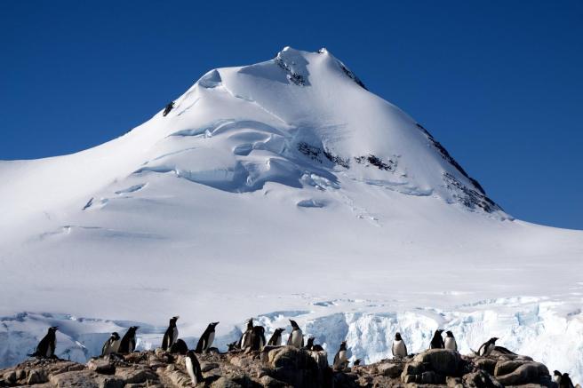 photos_and_videos/AntarcticaPenguins_10155338149716869/18209246_10155338175916869_8563055774279426202_o_10155338175916869.jpg