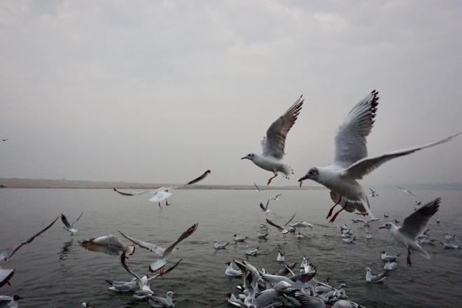 photos_and_videos/India_10156017845096869/28061805_10156238452771869_8560421274685542051_o_10156238452771869.jpg