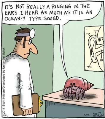 Crab hears the ocean