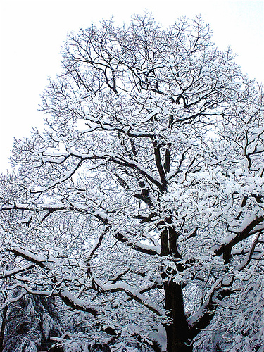 ice tree by serendipitypeace2007