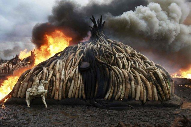 mountain-of-elephant-tusks