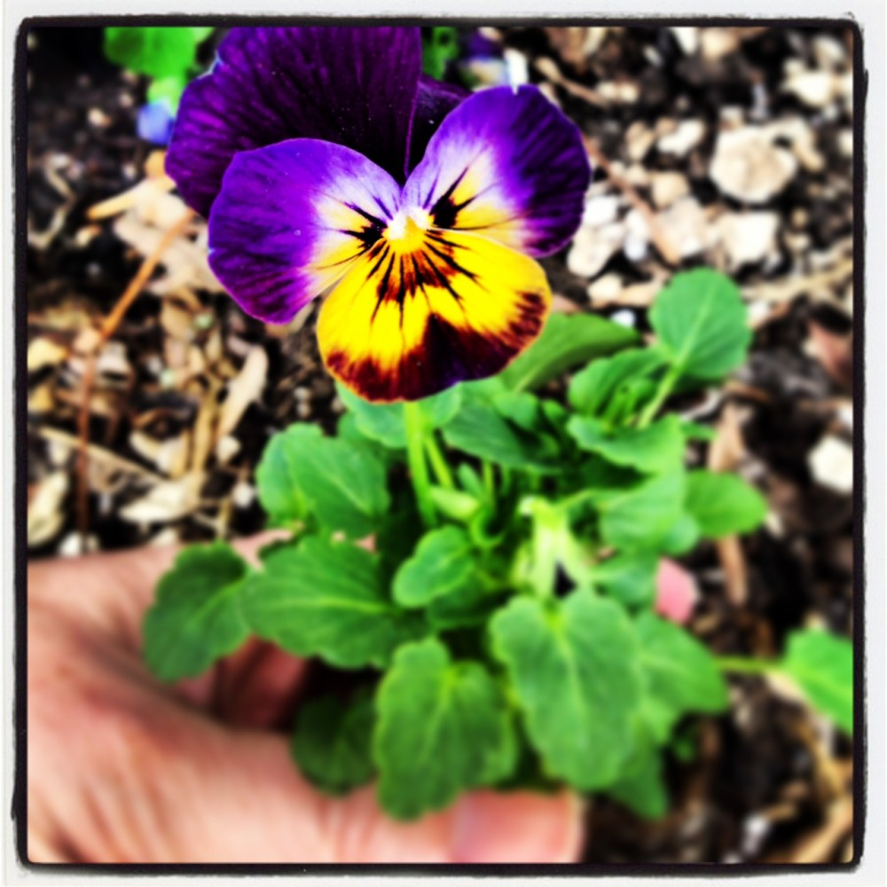 Planting Flowers and the Rhythm of Grief (2/4)