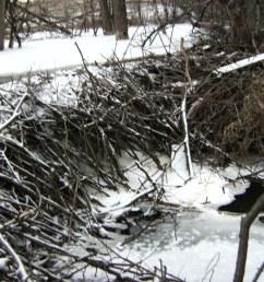 bull creek beaver dam [ 1600 x 1200 Pixel ]