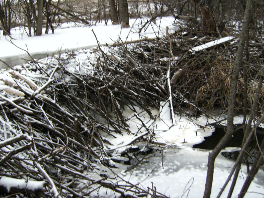 medium resolution of bull creek beaver dam