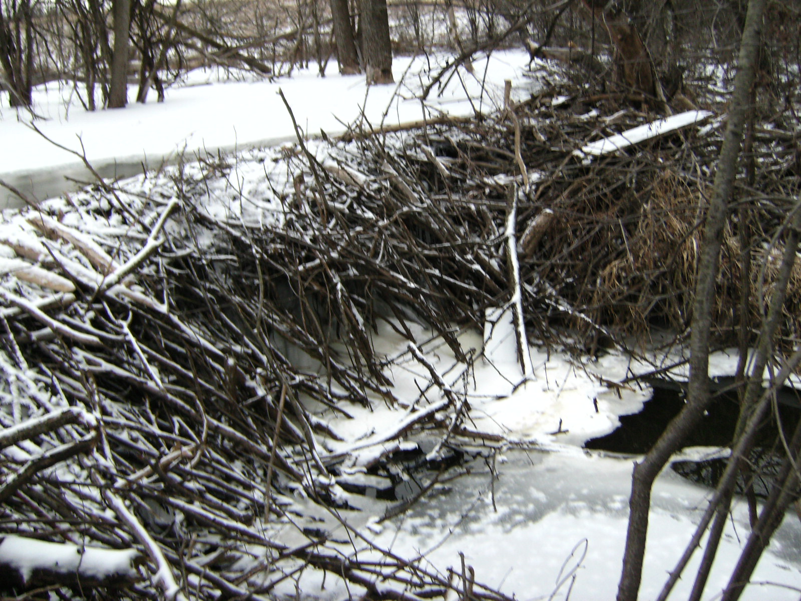 hight resolution of bull creek beaver dam