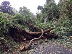 Tree down at the Capital Crescent Trail mile 7 marker. Good to know Im not crazy.