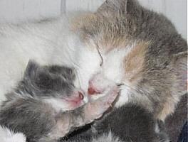 I love you, mama.