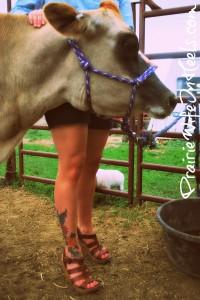 sweet mama cow