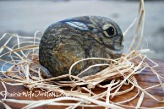 painted rock rabbit