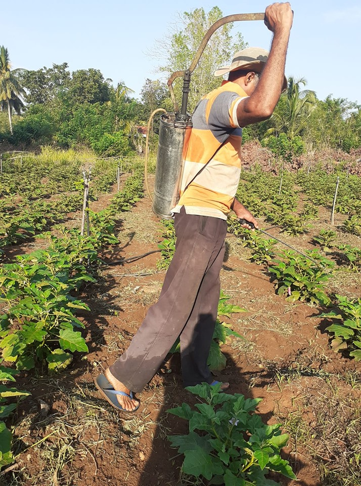 Farmer spraying pesticide in Sri Lanka