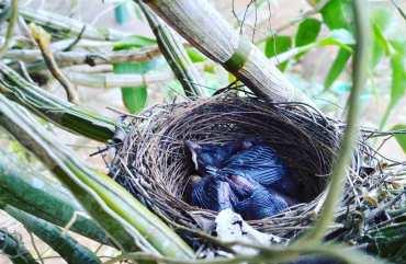 bird nest - Photo by Ajith Perakum Jayasinghe